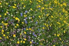 Fleurs sauvages Photographie stock