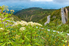 Fleurs sauvages avec la route de recourbement sur le fond Image libre de droits
