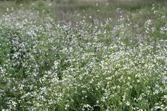 Fleurs sauvages avec le fond defocused photo stock