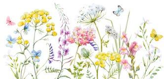 Fleurs sauvages d'aquarelle illustration libre de droits