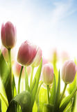 Fleurs sauvages d'art couvertes de rosée à la lumière du soleil photos stock