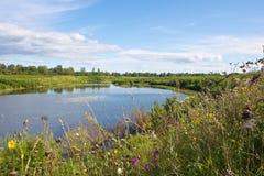 Fleurs sauvages d'un été près du lac photos stock