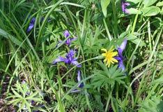 Fleurs sauvages dans l'herbe Photographie stock libre de droits