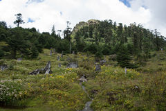 Fleurs sauvages dans la forêt de pin Images stock