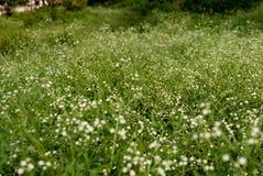 Fleurs sauvages dans la steppe photos libres de droits