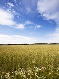 Fleurs sauvages dans le domaine de blé Photos stock