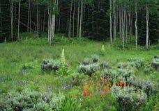Fleurs sauvages dans une forêt de tremble photographie stock libre de droits
