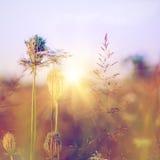 Fleurs sauvages de beauté sur le pré Image stock
