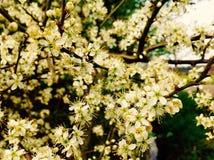 Fleurs sauvages de belle fleur le long de la route Image stock