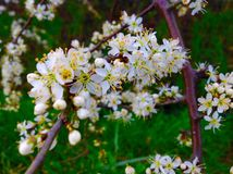 Fleurs sauvages de belle fleur le long de la route Photos stock