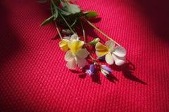 Fleurs sauvages de champ sensible image libre de droits