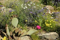 Fleurs sauvages de désert photographie stock