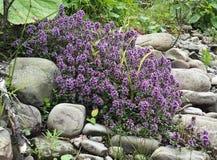 Fleurs sauvages de forêt Photo libre de droits