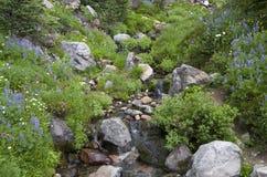 Fleurs sauvages de montagne Photo libre de droits