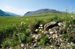 Fleurs sauvages de montagne Image libre de droits