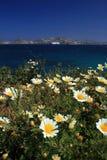 Fleurs sauvages de plage - Paros Photographie stock