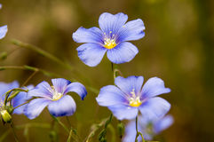 Fleurs sauvages de ressort Photographie stock