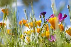 Fleurs sauvages de source Image libre de droits