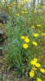 Fleurs sauvages de source Image stock