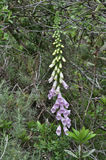Fleurs sauvages de source Photo libre de droits
