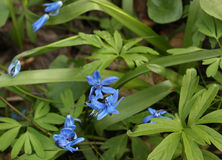 Fleurs sauvages de source. Clairières image stock