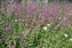 Fleurs sauvages diverses dans le domaine en plan rapproché image libre de droits