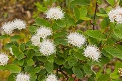 Fleurs sauvages du Yukon Photos libres de droits