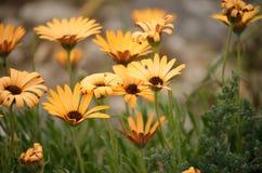 Fleurs sauvages en fleur Photo stock