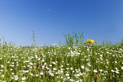 Fleurs sauvages en mai Photo libre de droits