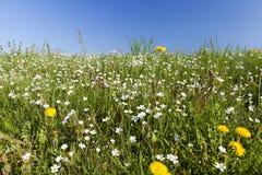 Fleurs sauvages en mai Images stock