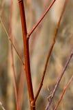 Fleurs sauvages et faune Photo libre de droits
