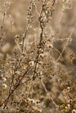 Fleurs sauvages et faune Photo stock
