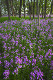 Fleurs sauvages et forêt roses photographie stock