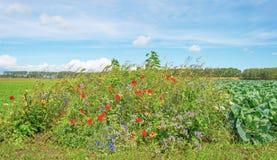 Fleurs sauvages et légumes dans un domaine au soleil images stock