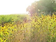Fleurs sauvages latérales de route Photos stock