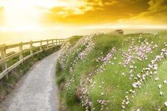 Fleurs sauvages le long d'un chemin de promenade de falaise photos libres de droits