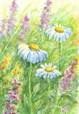 Fleurs sauvages - peinture d'aquarelle Images stock