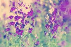 Fleurs sauvages pourprées Image stock