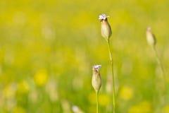 Fleurs sauvages pourprées Photos libres de droits