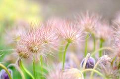 Fleurs sauvages roses lumineuses, fond floral gentil Images libres de droits