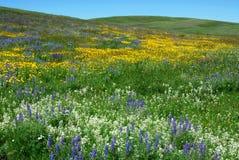 Fleurs sauvages sur la prairie d'Alberta Photographie stock libre de droits