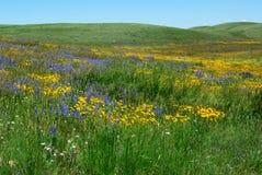 Fleurs sauvages sur la prairie d'Alberta Photos stock