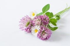 Fleurs sauvages sur le fond blanc Photos stock