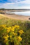 Fleurs sauvages sur Llandwyn, île Photographie stock libre de droits