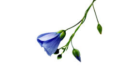 Fleurs sauvages sur un blanc image libre de droits