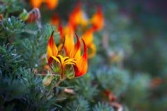 Fleurs se réveillant à l'entrée du ressort photographie stock libre de droits