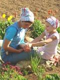 Fleurs semant ensemble Photos libres de droits