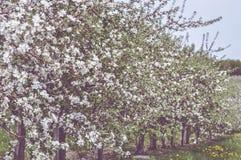 Fleurs sensibles Images stock