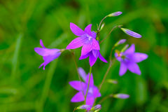 Fleurs sensibles Photos libres de droits