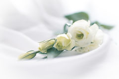 Fleurs sensibles Photographie stock libre de droits